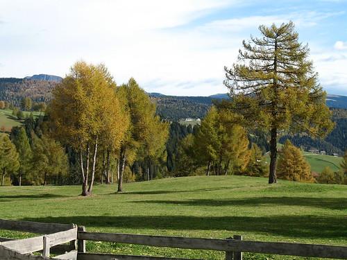 Blick durch die Lärchenwälder in Richtung Sarntal direkt unterhalb des Kirchleins Langfenn