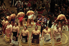 sumo on display