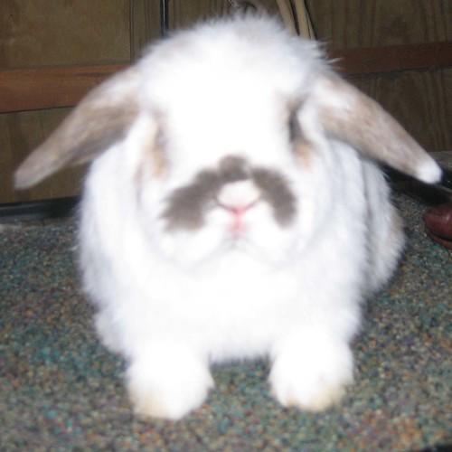 Rabbits #3