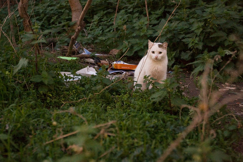 [25/365] Wild cats