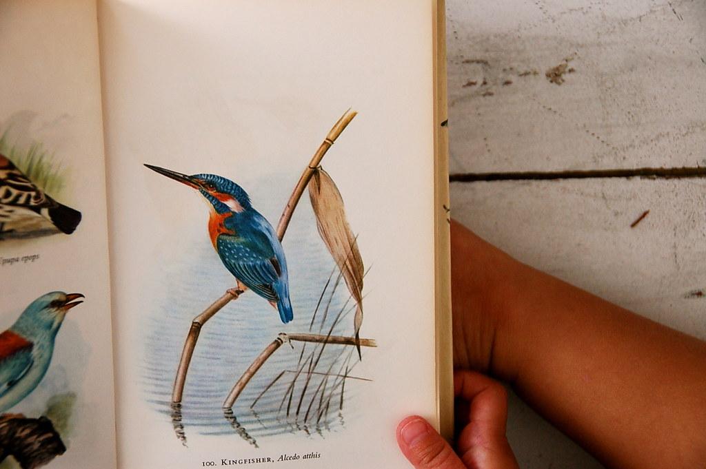 vintage bird book