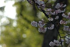 第10回お散歩写真部@湯島〜上野 Part03