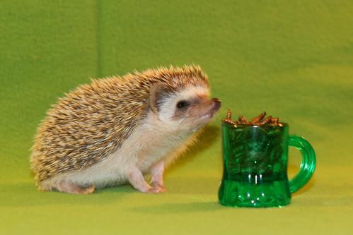 Hedgehog Wiki : 000002-Ziggy