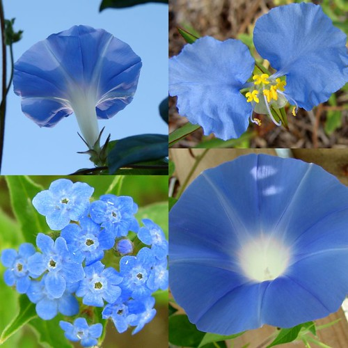 blue memorial day flowers