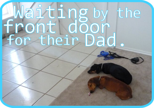 Waiting for their Dad to come home.