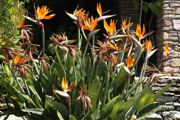 jardin-botanique-porto08