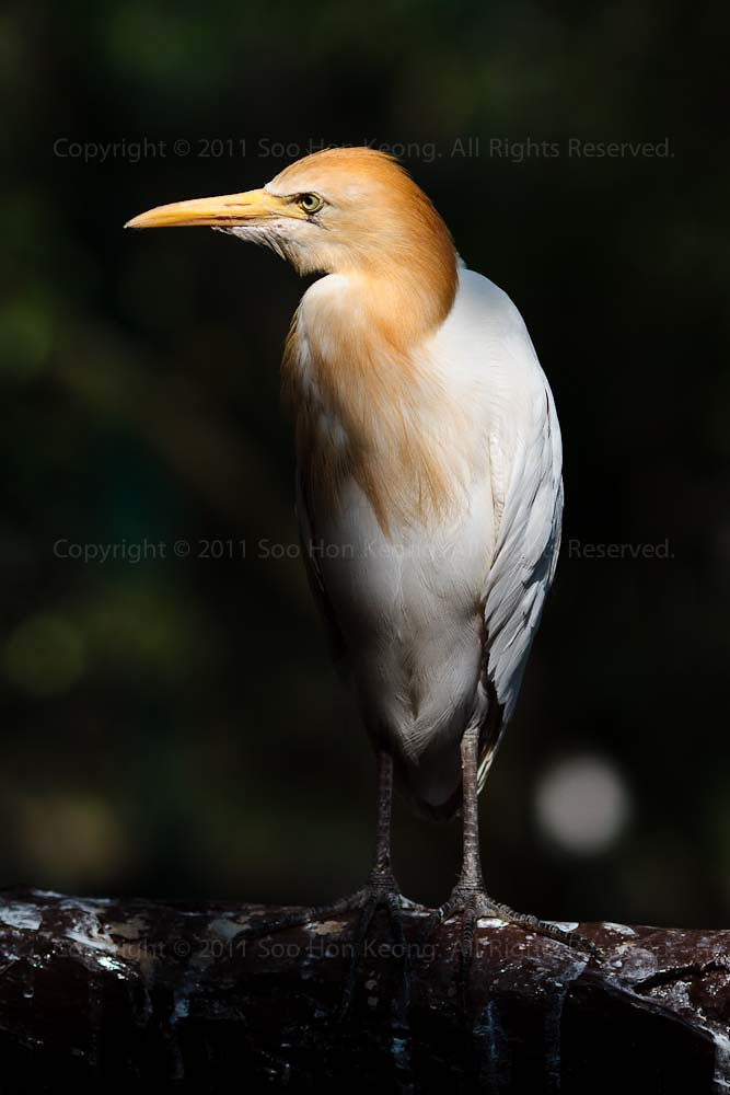 I look @ KL, BirdPark, Malaysia