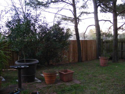 Back_Yard_Fence009.JPG