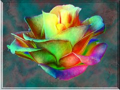 NEON ROSE ON MARBLE (fantartsy JJ *2013 year of LOVE!*) Tags: flowers blue friends roses color macro nature beauty photoshop easter spring searchthebest tulips magic vivid fantasy frame collaborative photoart soe pictureperfect specialeffects aclass fpc imagepoetry creativephoto fineartphotos mywinner worldbest colorphotoaward impressedbeauty irresistiblebeauty superbmasterpiece diamondclassphotographer superbmasterpice searchandreward creativephotographers eliteimages proudshopper theperfectphotographer goldstaraward clevercreativecaptures life~asiseeit goldolivebranch envyenviedphotos flcikrenvy theclevercreativecapturesgroup mimisframecontest