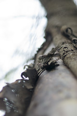 Tension (Friedel Callies) Tags: tree 85mm bark baum rinde kirsche f118