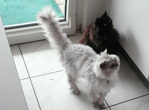Fluffy and Nera waiting for Tuna Fish