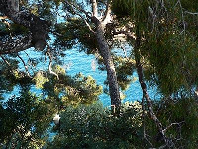mer bleue derrière les pins.jpg