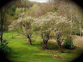 farm-spring-shot