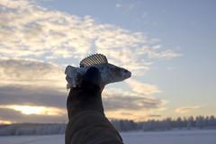 ahven (Jeevie) Tags: rovaniemi icefishing kemijoki nikond40kit