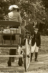 Holding the lady's horse (smcarterphotos) Tags: horses countryside carriage pferd equine