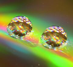 cd water drops (Cindy シンデイー) Tags: water drop goldstaraward