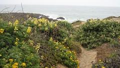 coastal_flowers