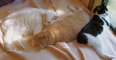 Kitty Siesta (Gail S) Tags: pinky spooky thepuss catsandwindows