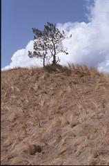 roosendaal-84332-0701 (Cor Draijer) Tags: zandvoort roosendaal mijndert