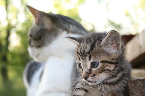 Gatito con su mami