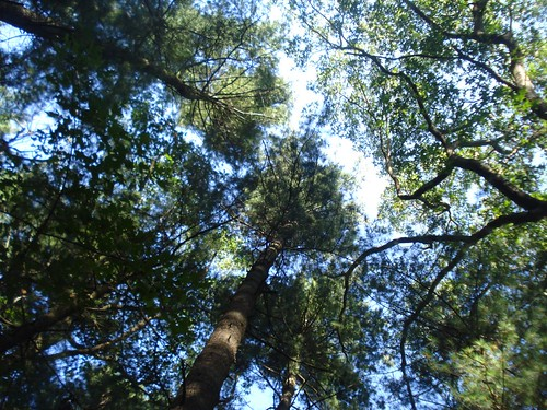 2 - Parmenter: Canopy view