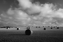 Hay Bales - Clippesby (Phil Carpenter) Tags: norfolk harvest hay haybales acle clippesby thurne