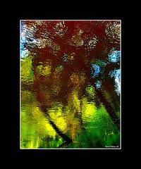 Inclination...!!! (Denis Collette...!!!) Tags: trees wild canada reflection tree reflections river photo quebec photos rivire safari reflet arbres qubec rivers walden collette arbre reflets photosafari impressionist denis sauvages thoreau sauvage gbr inclination impressionists rivires portneuf wildrivers firstquality wildriver impressionistes impressionniste deniscollette pontrouge riviresauvage obq riviressauvages photossafari
