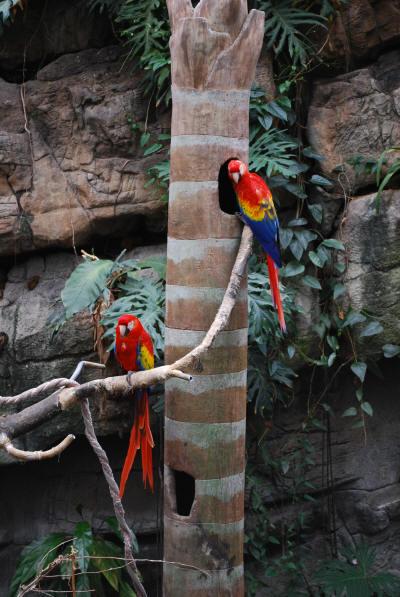 rainbow_birds_1