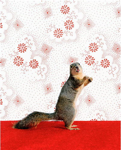 "Catherine Ledner ""Squirrel 1"""