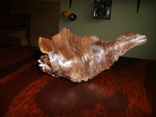 Susquehanna Drift Wood