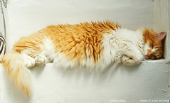 hard-days-day (carloszolrak) Tags: boy pet cats pets animal animals cat gatos gato felino animales