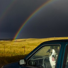 the dog, the rain, the rainbow (zyrcster) Tags: field rain clouds skyscape rainbow colorado abby flickrmeet hwy67 photofaceoffwinner photofaceoffplatinum pfogold autumn2008 pfohiddengem phlow:emote=laugh