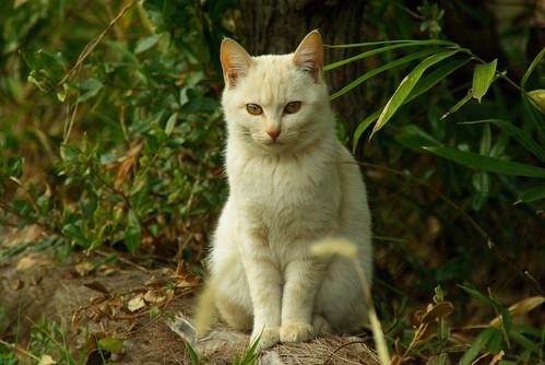 Stray Cat #24