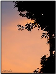 (/Fathimah) Tags: morning blue orange plants tree nature leaves sunrise dawn colours purple fathimahn