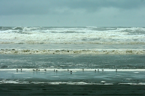 Shore Birds and Surf