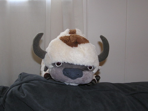 Appa, head-on