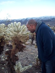 jesse tries to eat the cholla
