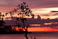 Barcarena, Pará, Brasil (Ricardo_ Lima) Tags: sunset pordosol brazil brasil amazon amazonia barcarena platinumphoto