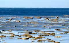 bassa marea (LivornoQueen) Tags: italians