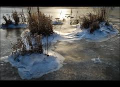 archipelago (=Я|Rod=) Tags: brown snow ice grass creek reflections river iso100 frozen dry noflash textures crop frame bremen wümme lightroom f42 onexplore borgfeld ooc warmlights frozenup 1160s outofcam explore225 closetosunset 23ev nikond80 diamondclassphotographer flickrdiamond pspx2 nikon1685vr ©rerod 2639mm я|r ©reinerrodekohr