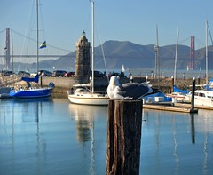 so very close and yet totally untouchable! (pbo31) Tags: sf sanfrancisco california above bridge blue usa brown color reflection bird northerncalifornia sailboat america marina bay boat nikon sitting view weekend seagull gull over january goldengatebridge bayarea sail d200 marinadistrict peninsula westcoast 2009 nautica yachtharbor sanfranciscocounty goldengateyachtclub