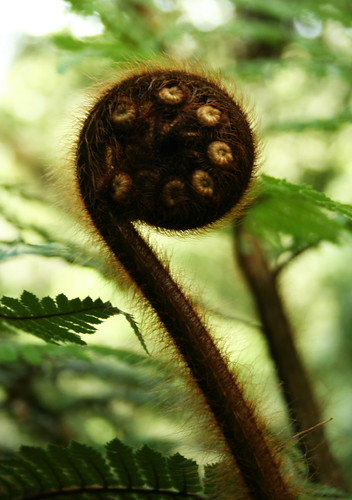 A Koru; a growing fern, symbol of New Zealand!