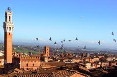 volando su Siena