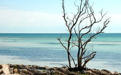 Key West Florida (Jeny's flickr page) Tags: west key florida