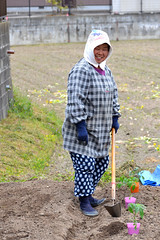 Miyaki Town Farmer Working (pokoroto) Tags: people woman field japan town spring working hoe april  farmer saga nagasaki kyushu   4 miyaki 2011  uzuki kaido   shigatsu unohanamonth 23  nakabarushuku