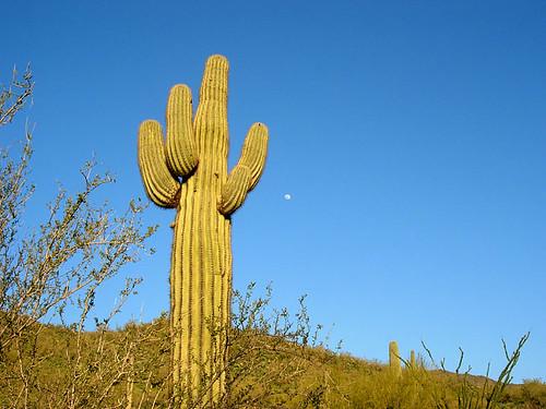saguaro-moon-9622.jpg