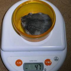 コー太は少し体重がへりました