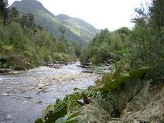 Trek Chaiten - Lagunas - Alerce - Escondidas - riviere