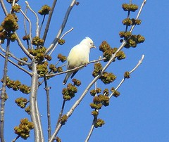 White mystery bird 2