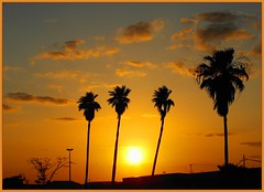 The palm trees at sunset, Executive Airport, Fort Lauderdale (Scape Pics) Tags: sunset florida sunsets southflorida browardcounty naturesfinest photographicallyyours diamondclassphotographer flickrdiamond flickrlovers